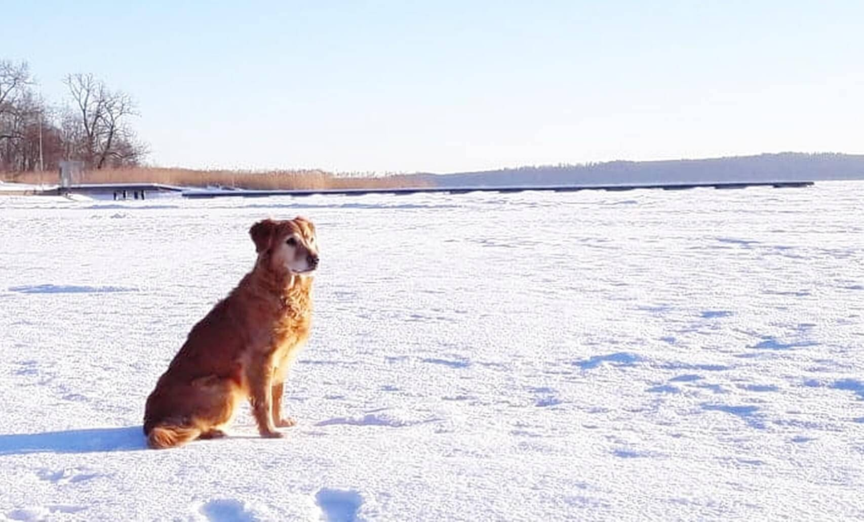 Alla Hundägares Mardröm