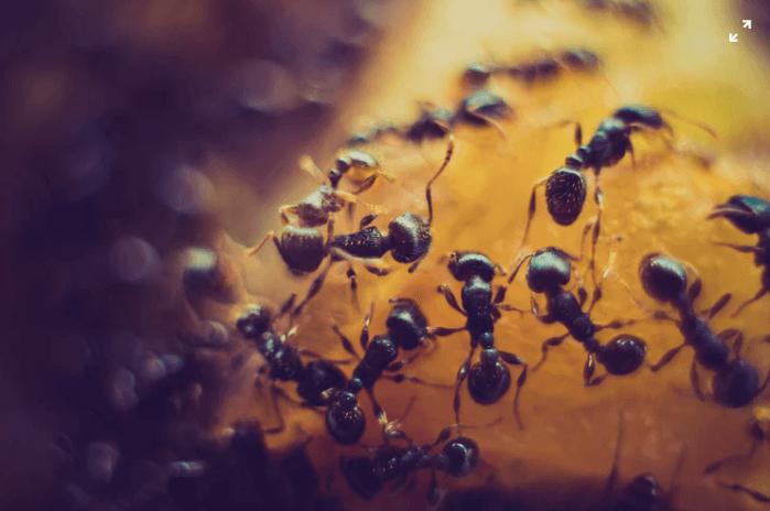 Så skyddar du dig mot myror och getingar
