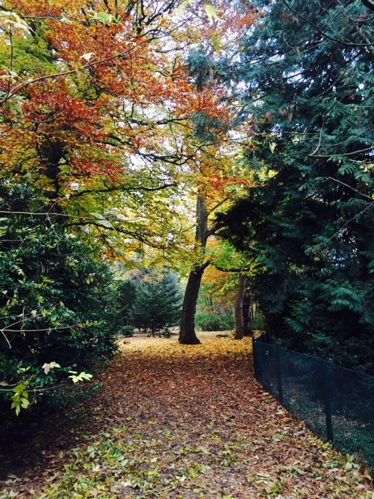 Bild på träd i ljuvligaste höstfärger. Mark täckt av höstlöv.