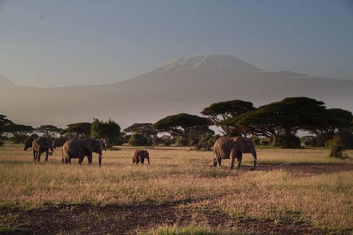 Savann med elefanter