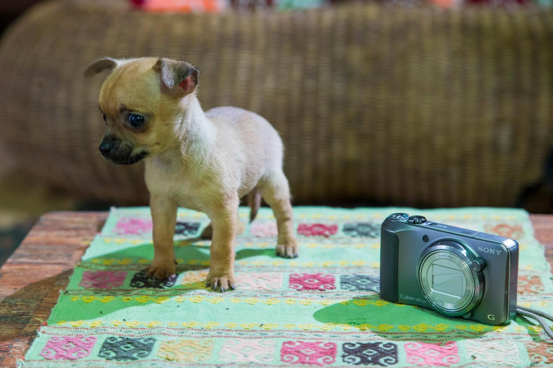 En liten hund med stort hjärta