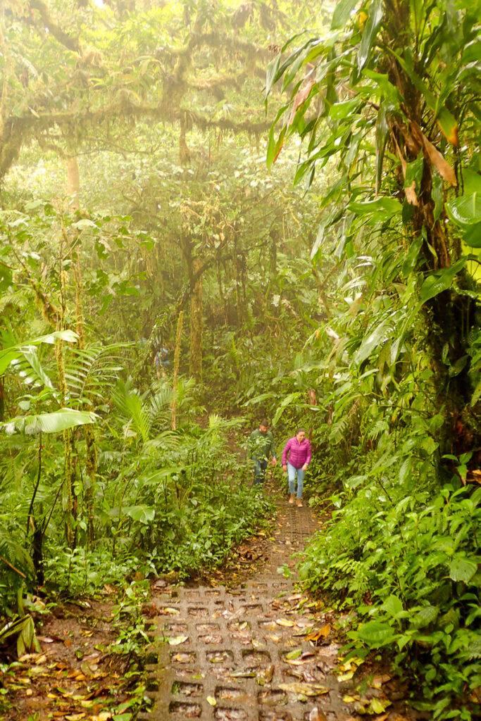 Vandrare i Monteverdes molnregnskog.