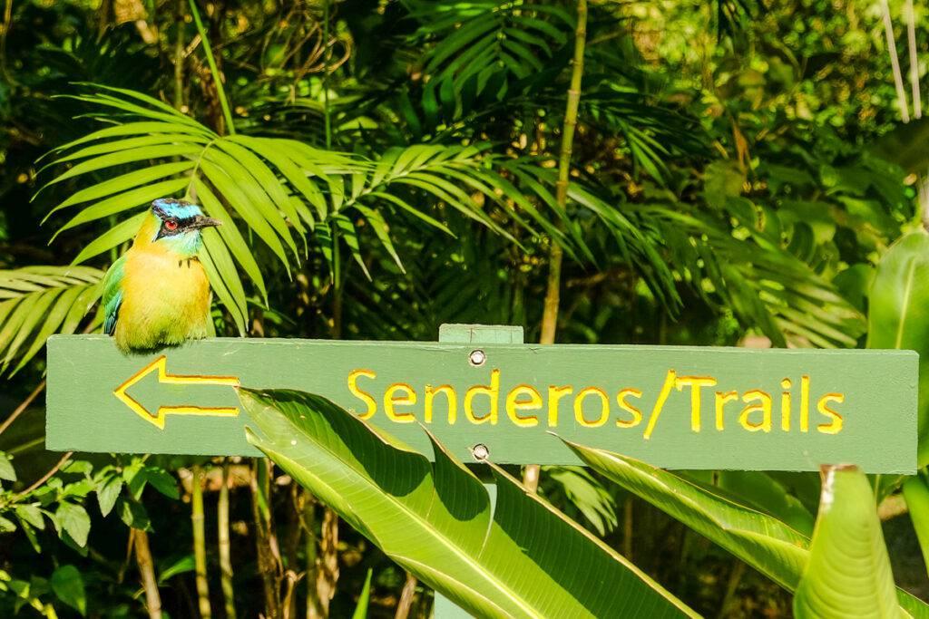En fågel sitter på en skylt i Barnens eviga regnskog.