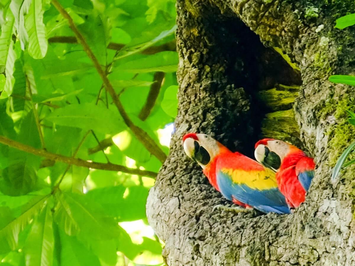 Sköna Gröna Costa Rica
