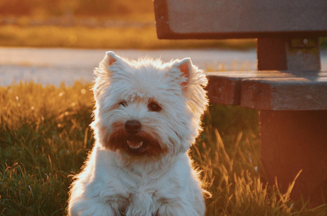 Hälften av alla hundar i Sverige väger för mycket