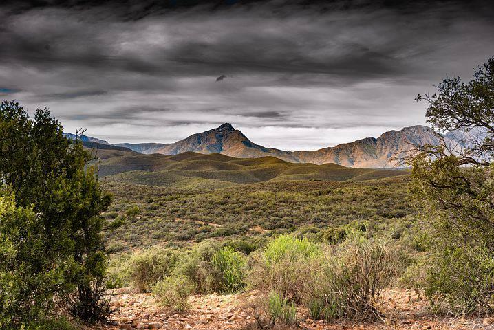 Bild över savann i Sydafrika