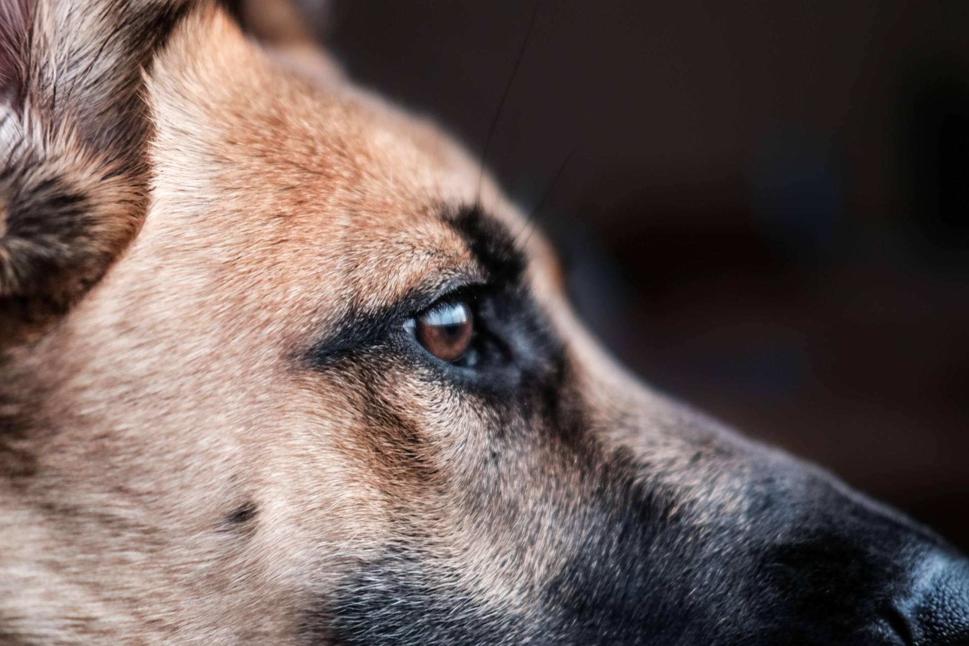 Forskningen visar att hundar förstår både vårt kroppspråk och hela meningar – inte bara enstaka kommandon.