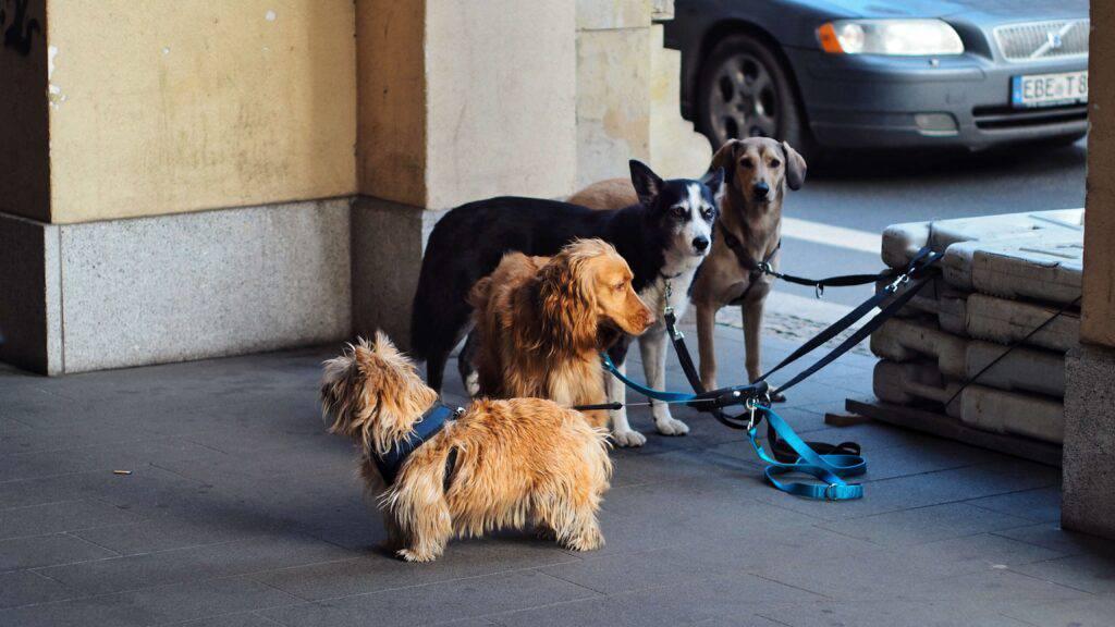 Fyra olika hundraser i koppel