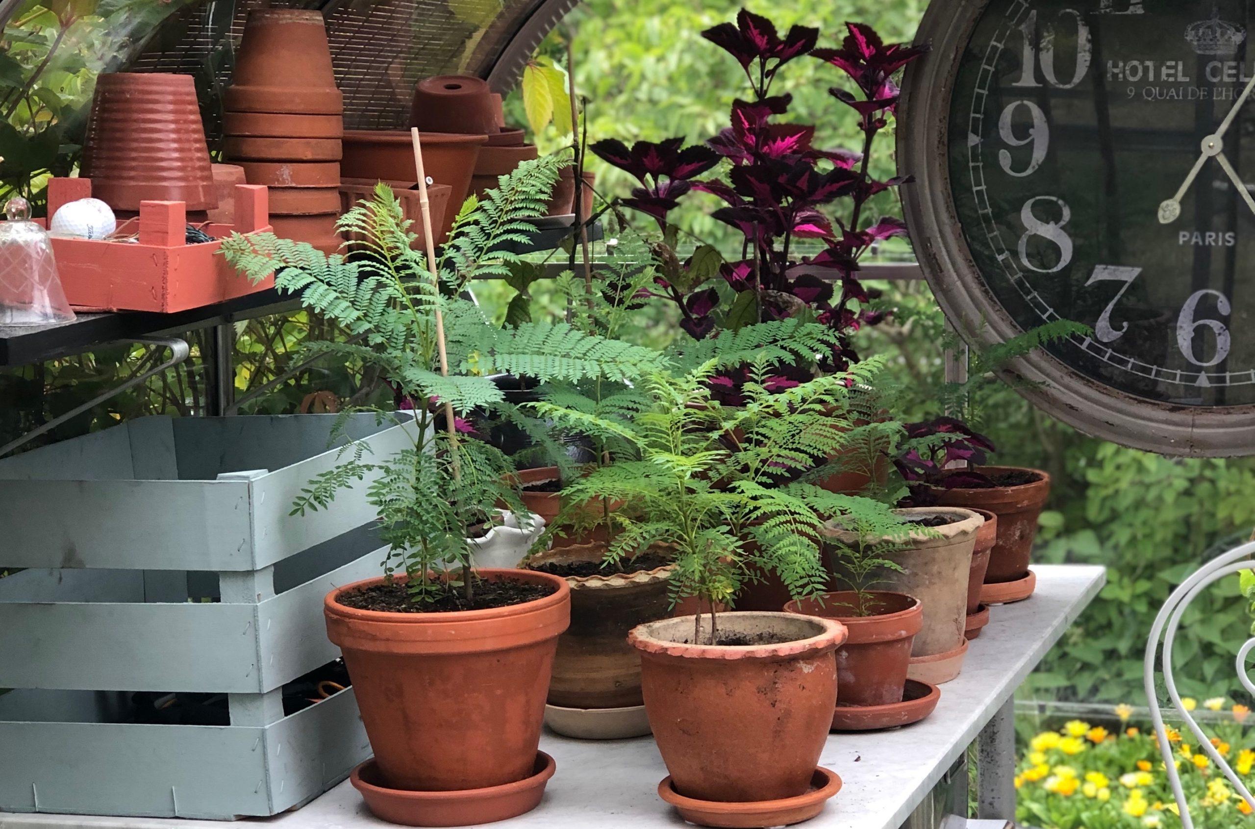Budgettips I Trädgårdstider