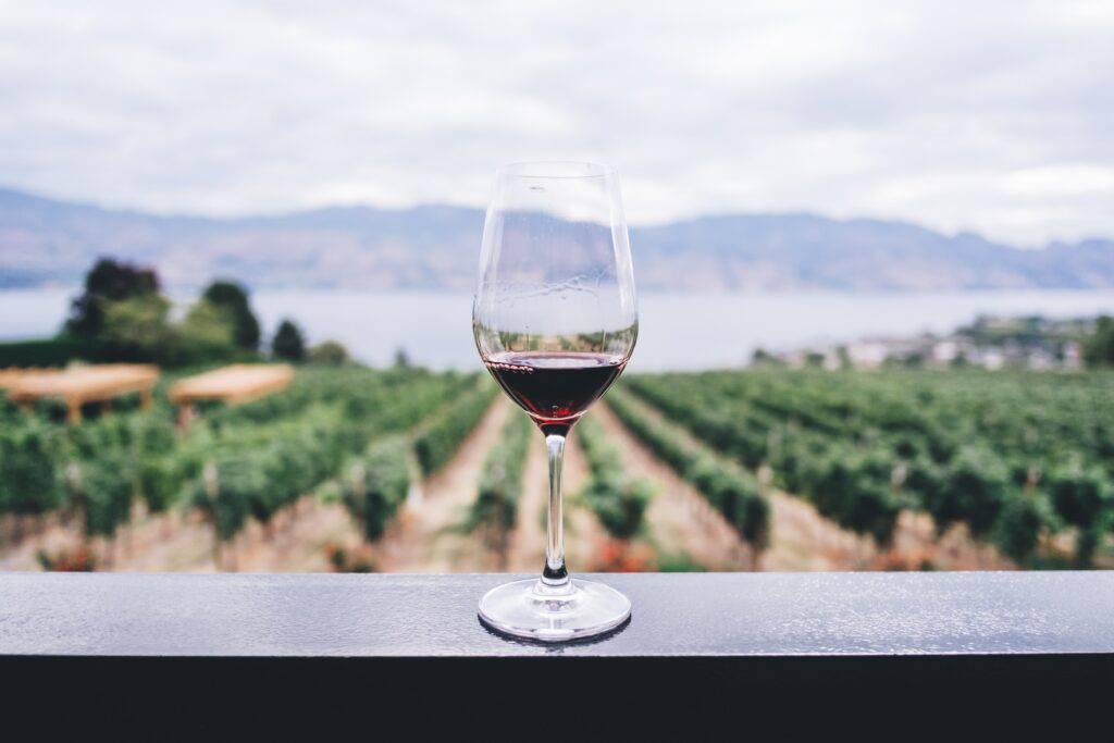 Vinglas med rödvin och rankor i bakgrunden.