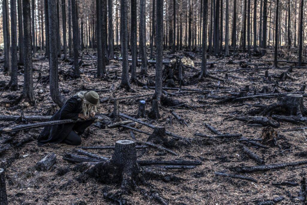 Bränd skog i Hälsingland.