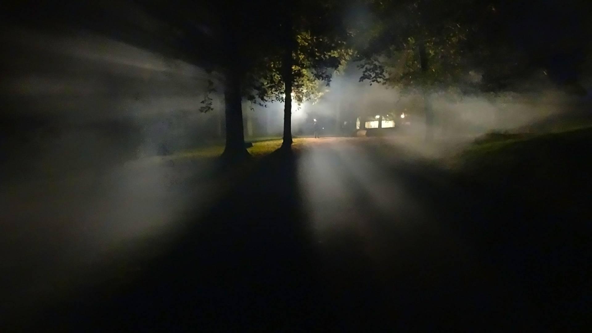 Ljusglänta i skogen