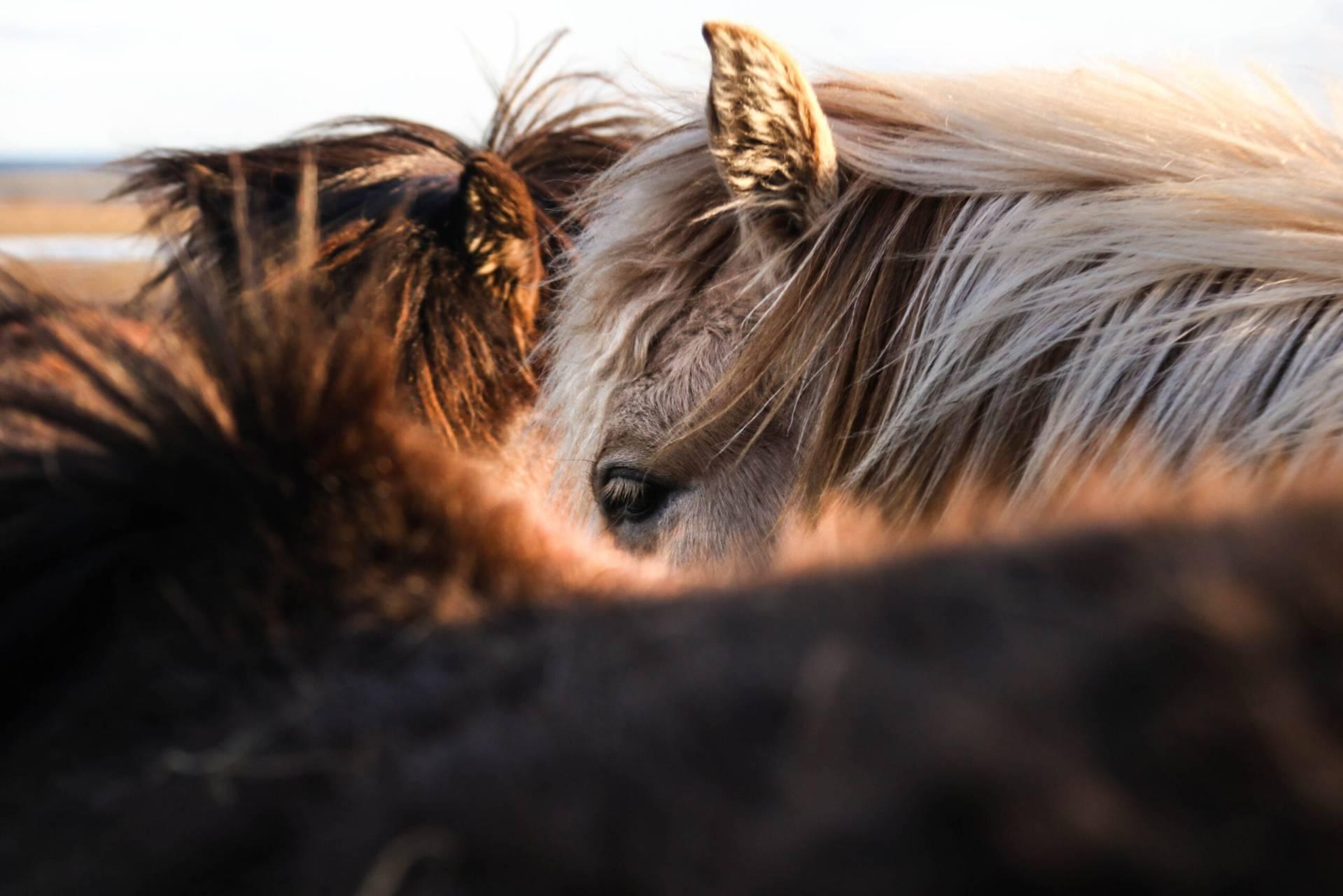 Vad var det som gjorde att hästarna i stallet bytte plats med varandra varje natt? Foto: Unsplash