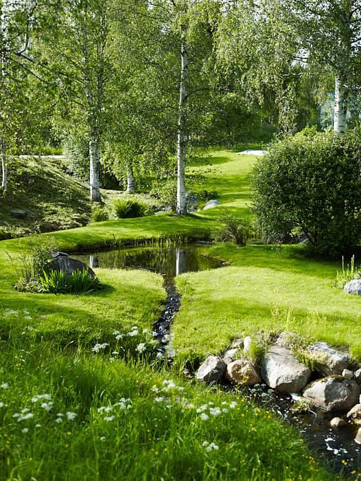 Öppen mark, björkar med höga kronor och vita stammar, en naturlig bäck som genar över tomten. Grönska och fräscht vatten.