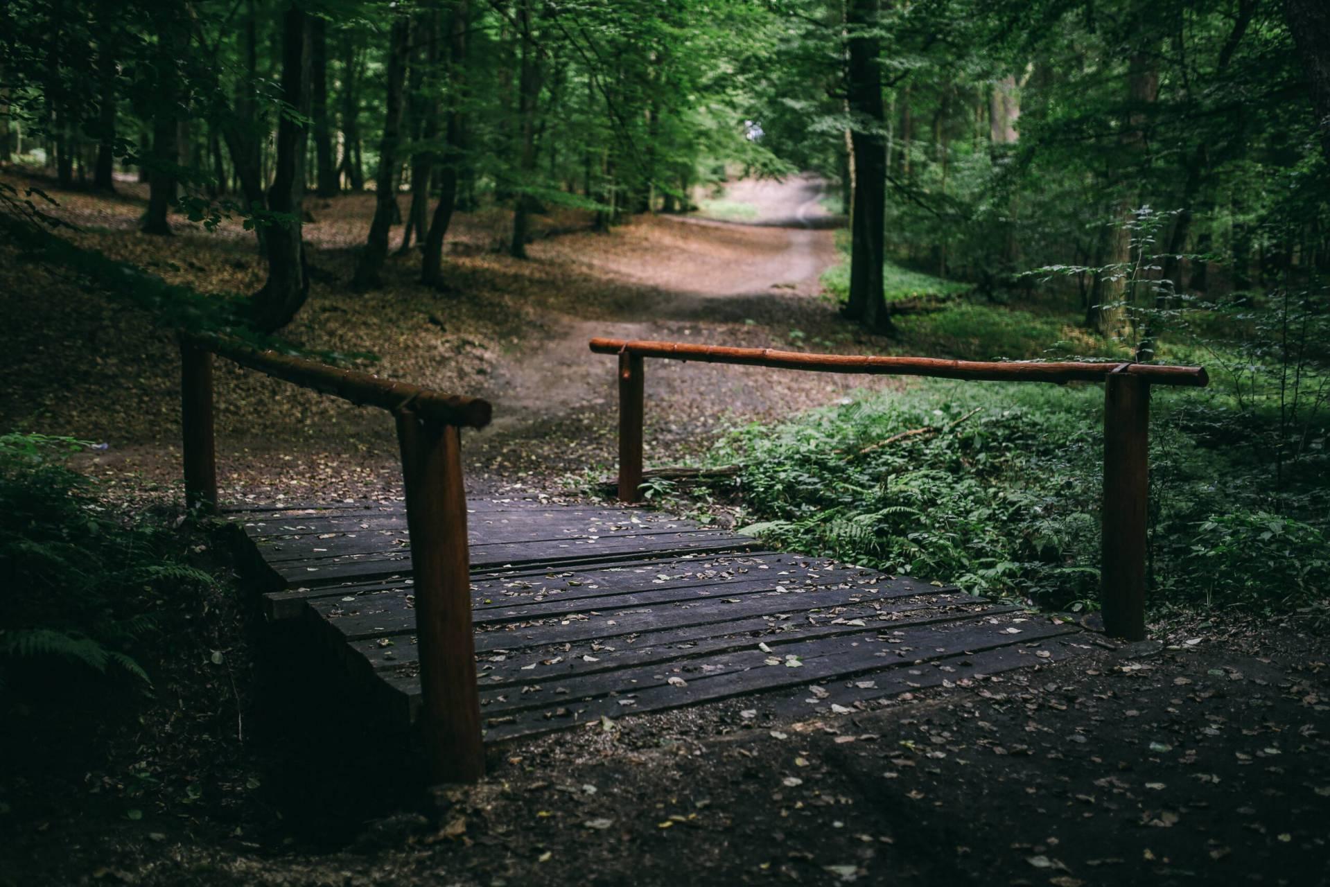 träbro över en å i skogen