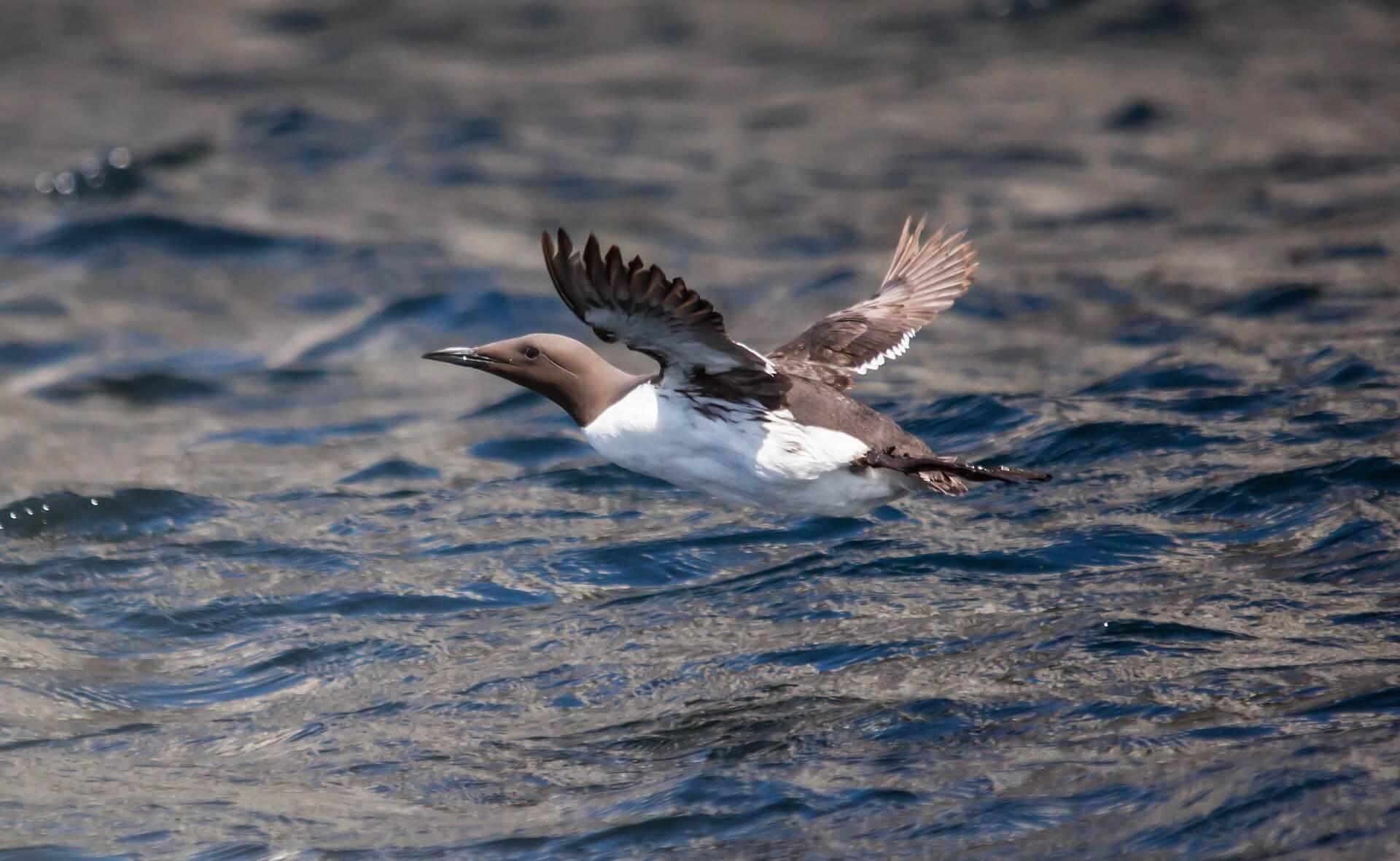Natthikos Betraktelser: Den Tuffaste Fågeln